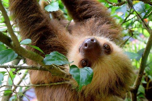 sloth-1879999__340