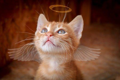 cat-3869583__340